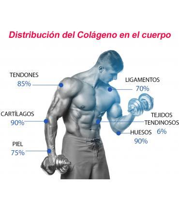 donde se encuentra el colageno en nuestro cuerpo