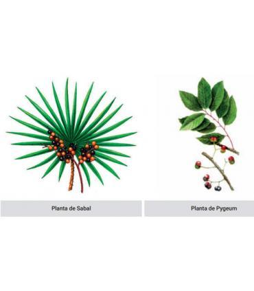 planta sabal y planta pygeum