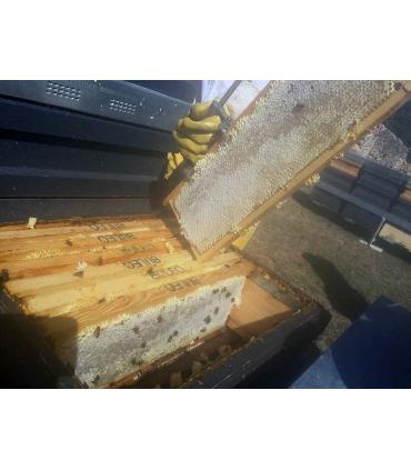 miel en panal Buleo Mellarius