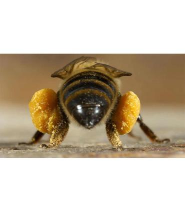 Polen de abeja ecológico granulado Mellarius Buleo Miel 225 gr