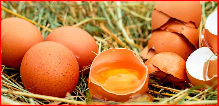 batido proteína de huevo